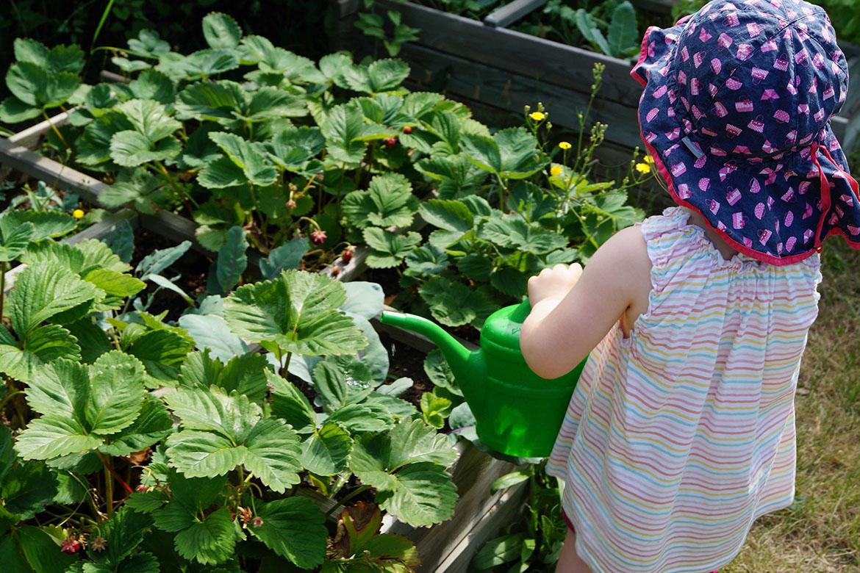 Kind giesst Pflanzen_Kita zur Bimmelbahn_web©ASB Dresden und Kamenz gGmbH.jpg